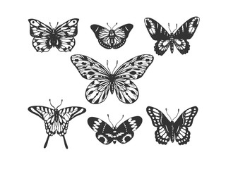 Butterfly insect animal engraving vector