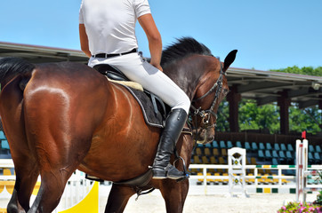 Young, athletic, thoroughbred horse on dressage, close-up