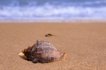 The beautiful shell lies on the sea coast behind the waves