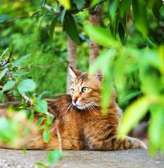 Portrait of beautiful ginger cat in the garden.