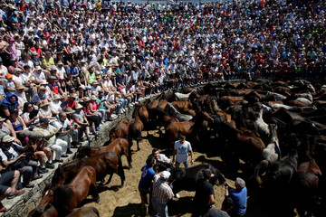 """Revelers try to hold on to a wild horse during the """"Rapa das Bestas"""" traditional event in the village of Sabucedo"""