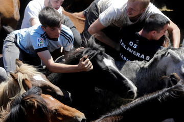 "Revelers try to hold on to a wild horse during the ""Rapa das Bestas"" traditional event in the village of Sabucedo"
