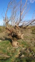 Arbre forme animaux