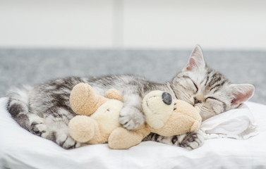 Cute baby kitten sleeping with toy bear