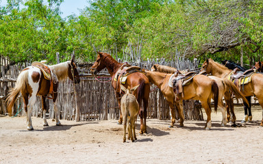 Horse farm in Cabo San Lucas, Mexico.  Cabo San Lucas is the most famous travel destination in Baja California.