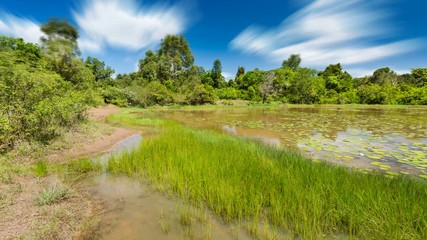 Wall Mural - Long exposure timelapse sequence of the beautiful Lily Lake in Karura Forest, Nairobi, Kenya with blue sky in 4K.
