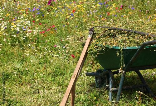 Okologie Mahen Einer Blumenwiese Stockfotos Und Lizenzfreie Bilder