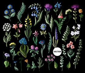 Big set of wild flowers isolated. Vector illustration.