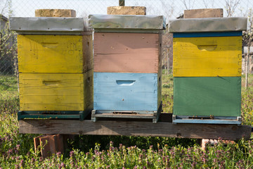 Beehives outdoors on the meadow.