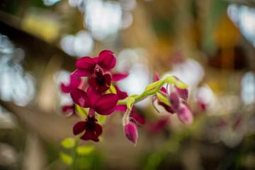 Fototapeta kwiaty storczyka obraz