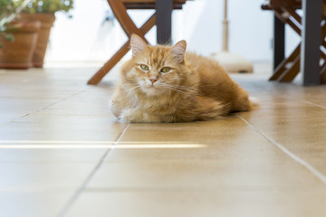 cat lying on the floor of the terrace