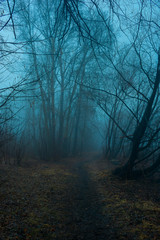 Wall Murals Forest Mystical forest in fog