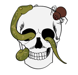 Skull with snake and spider creeping on it.