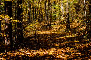 A forest trail in fall