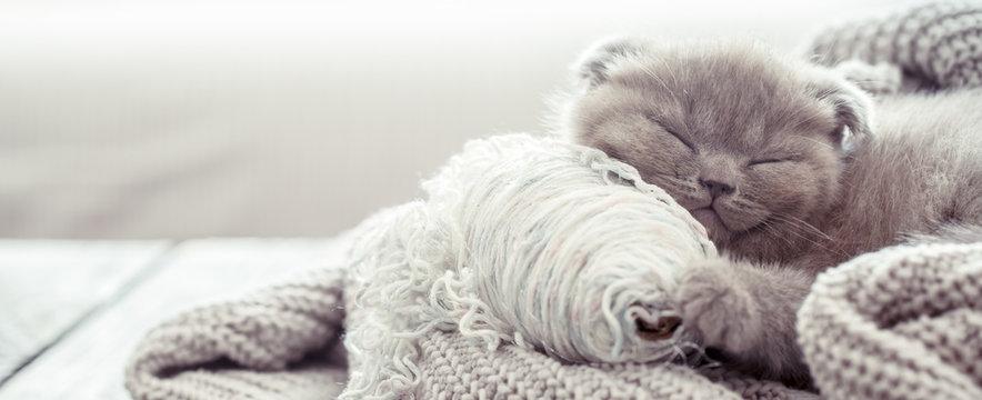 kitten sleeps on a sweater