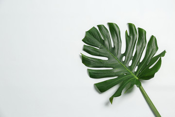 Beautiful tropical leaf on white background