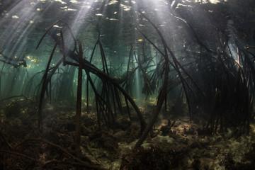 Fototapete - Dark Mangrove Forest in Komodo National Park