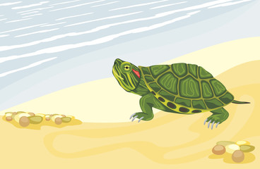 Turtle on the sandy shore