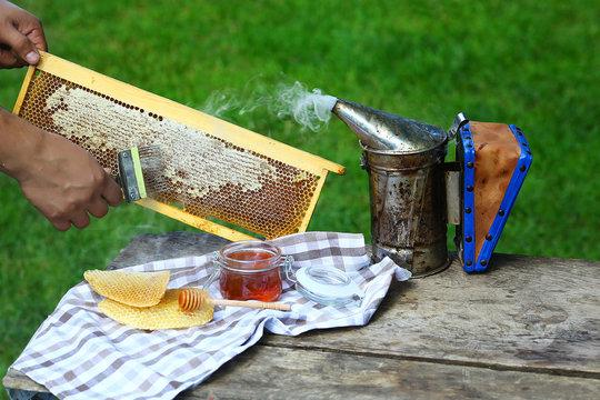 Beekeeper uncapping honeycomb with special beekeeping fork. chimney beekeeper. outdoors. Beekeeping concept