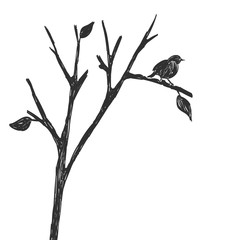 Silhouette of one bird on a branch. Figure sketch
