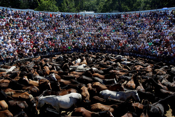 """Wild horses are seen gathered during the """"Rapa das Bestas"""" traditional event in the village of Sabucedo"""