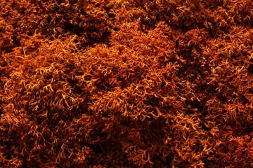 Moss. The texture of the moss Closeup , macro shot