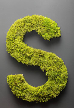 Letter S of moss.On the grey wall.