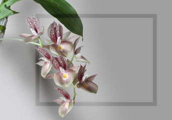 orchid flower frame on a gray background