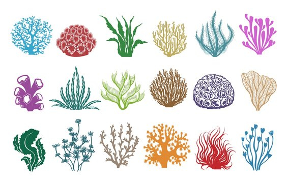 Seaweeds and corals on white. Colored aquarium plants vector illustration, color underwater sea weeds and ocean coral icons