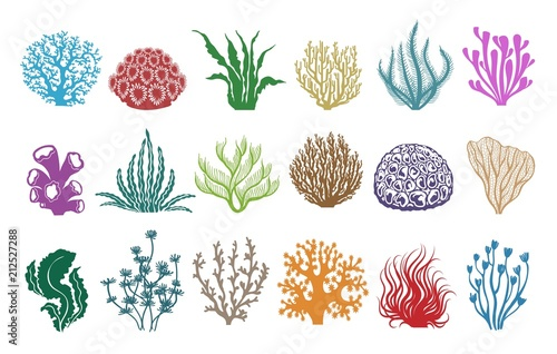 Seaweeds and corals on white  Colored aquarium plants vector