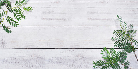 Wall Mural - green leaves on white vintage wood.