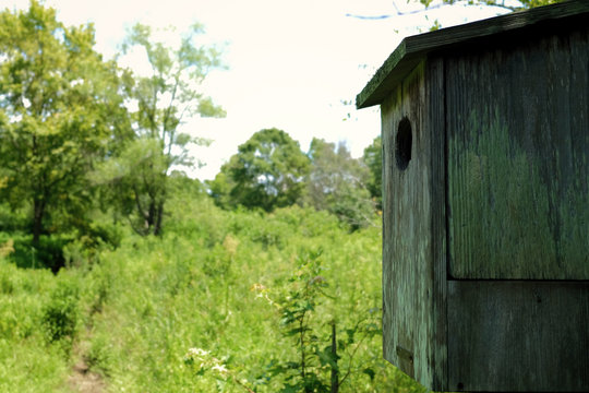 Wood duck boxes help promote a healthy habitat in the bottomlands at Yates Mill County Park in Raleigh North Carolina