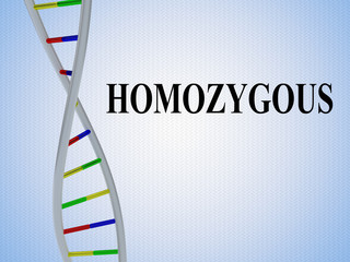 HOMOZYGOUS - genetic concept
