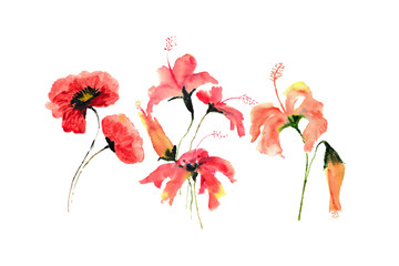 Poppy and hibiscus flowers on white background, watercolor hand painted