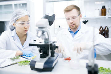 Portrait of two modern young scientists doing research studying food substances in laboratory, copy space