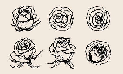 Rose vector set by hand drawing.Beautiful flower on brown background.Rose lace art highly detailed in line art style.Flower tattoo on vintage paper.