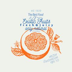 Grapefruit illustration. Hand drawn vector fruit illustration. Engraved style. Vintage citrus illustration.