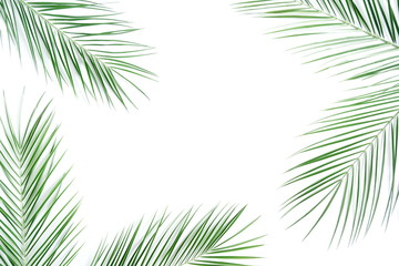 Tropical palm leaves branches on white background, camera, starfish. Summer concept. Flat lay, top view, copy space