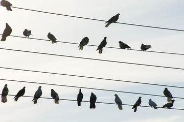 Pigeons sit on wires against the background of the sun
