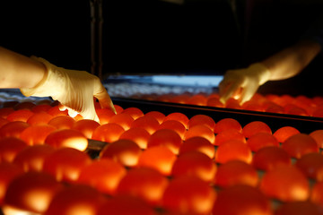 A woman inspects eggs for cracks at the Huayu hatchery in Handan