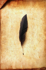 old paper on brown wood texture and feather for background