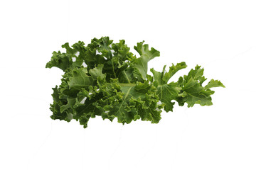 green fresh kale leaf isolated on white background