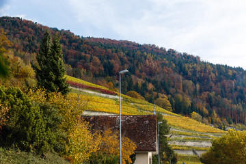 Wall Mural - village of switzerland autumn