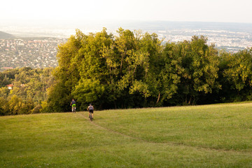 Two mountain bikers riding down from green hill to forest.