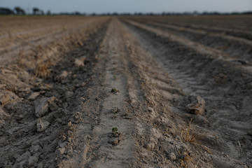 Tractor trails are seen in a soybean field at a farm in Gideon, Missouri