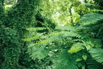 Landscape image of greenery rainforest