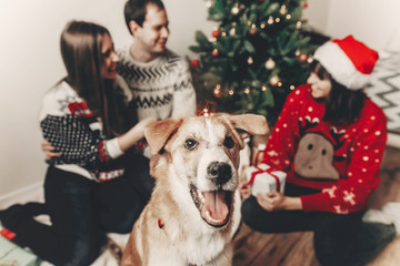 cute funny dog looking in front and happy stylish family in festive sweaters having fun at christmas tree lights. merry christmas and happy new year concept. happy holidays. space for text