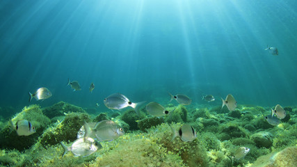 Underwater ocean background with fish