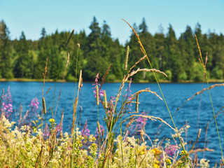 Bunte Blumen und Gräser am Ziegenberger Teich im Harz