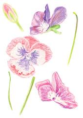 Illustration set of color drawing
